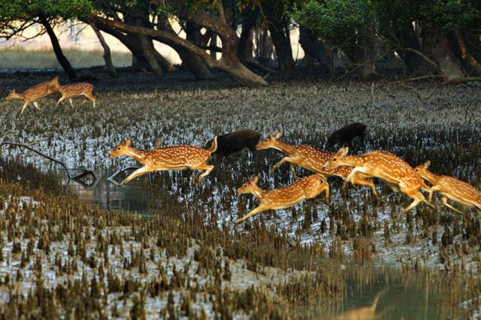 Sundarban Adventure