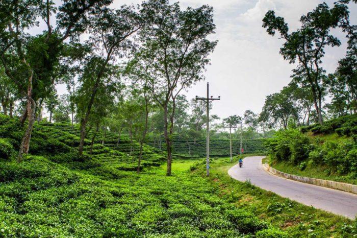 Sreemangal, Sylhet